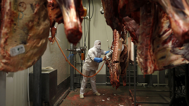 The bill also seeks to ban slaughter when the animals are in an 'unnatural state,' making kosher slaughter practically impossible (Photo: Reuters)