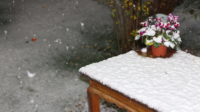 Wintry weather in northern Israel (Photo: Sheri Cohen-Manos)