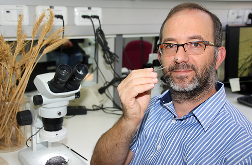 Prof. Ehud Weiss with the discovered seeds (Photo: Faith Baginsky)