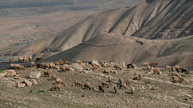 Area of land near Jericho that Israel plans to appropriate (Photo: Reuters)