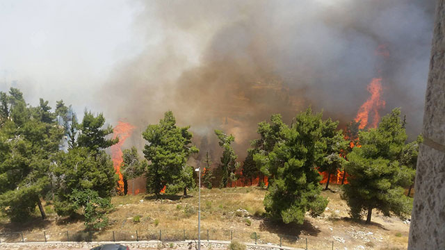 Forest Fire in Givat Shaul (Photo: Tal Cohen)