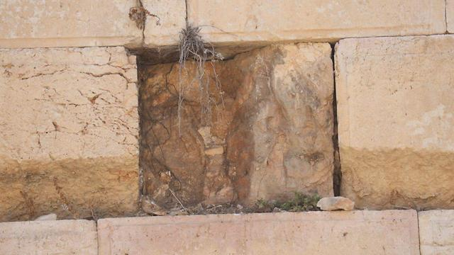 Photo: Western Wall requires inspection after stone detaches  (Photo: TPS)