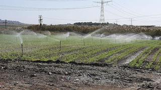 Irrigation of agricultural fields in the Galilee