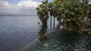 A dog swims where dry land used to be in the Sea of Galilee