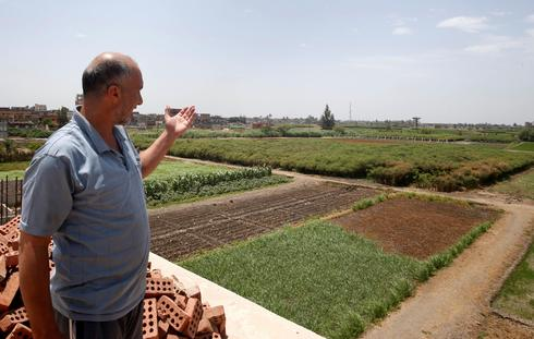 Abdlul Rahman Mostafa, 48, owner of papyrus farmlands and workshops looks at his agricultural land in al-Qaramous village