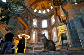 Gli the cat of Hagia Sophia or Ayasofya, a UNESCO World Heritage Site, is pictured in Istanbul, Turkey