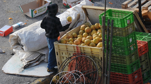 A child scavenging for food in Safed