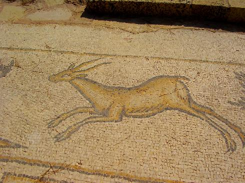 Byzantine-era mosaic of a gazelle in Caesarea
