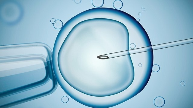 'We call this digital embryology'