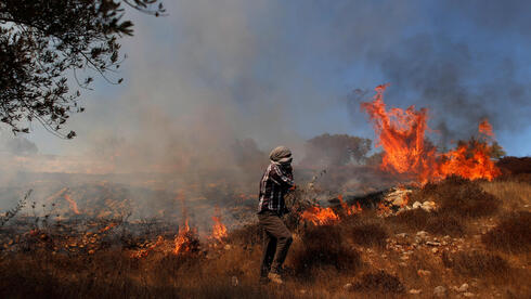 Grass burns in an olive field after Israeli forces fired tear gas canisters during a Palestinian protest against Jewish settlements