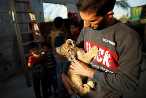 Palestinian man Naseem Abu Jamea holds one of his two pet lion cubs that he bought from a local zoo and keeps on his house rooftop, in Khan Younis, in the southern Gaza Strip