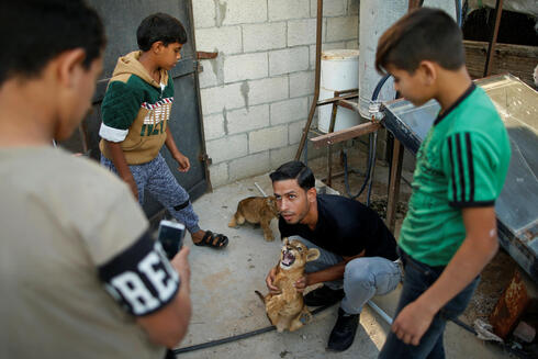 A man poses for a photo with a lion cub on the rooftop of the house of Palestinian man Naseem Abu Jamea, who keeps two pet lion cubs after buying them from a local zoo, in Khan Younis, in the southern Gaza Strip
