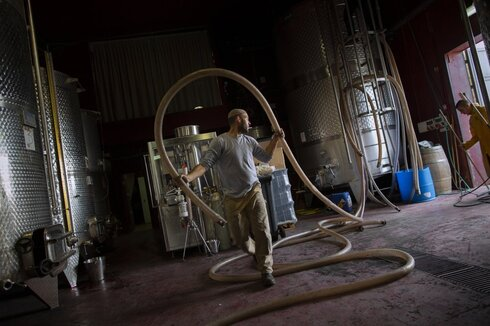 an Israeli employee of Psagot winery carries a pipe