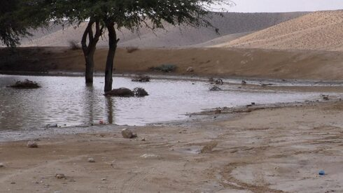 This pool of water formed in a depression in the Negev Desert following intense rainfall in November 2020