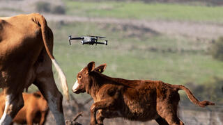 herding cattle by Drone, an Israeli company promotes new technologies in farming