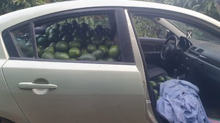 A private vehicle filled with stolen avocados on Kibbutz Glil Yam