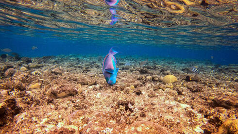 A view of marine life at a coral reef in the Red Sea waters off the coast of Israel's southern port city of Eilat, Feb. 2021