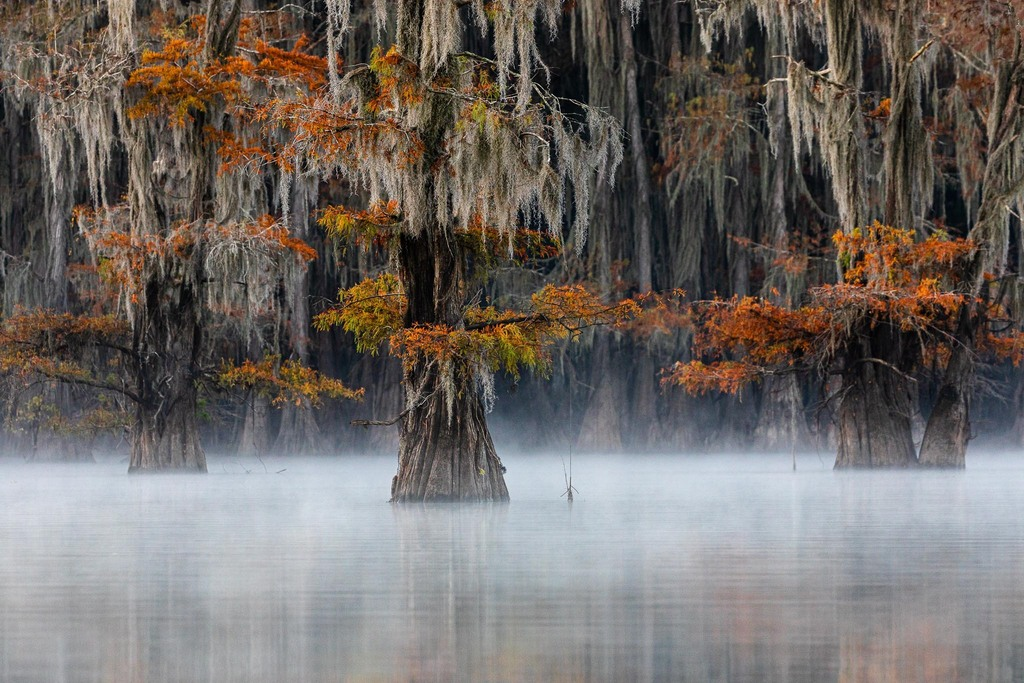 Mist at the swamp