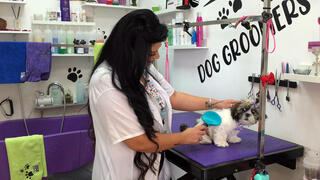 Jeje Jouly Touk, a hairdresser who was forced to switch to a dog groomer due to coronavirus disease