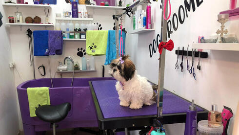 A dog sits on a service table at the shop of Jeje Jouly Touk
