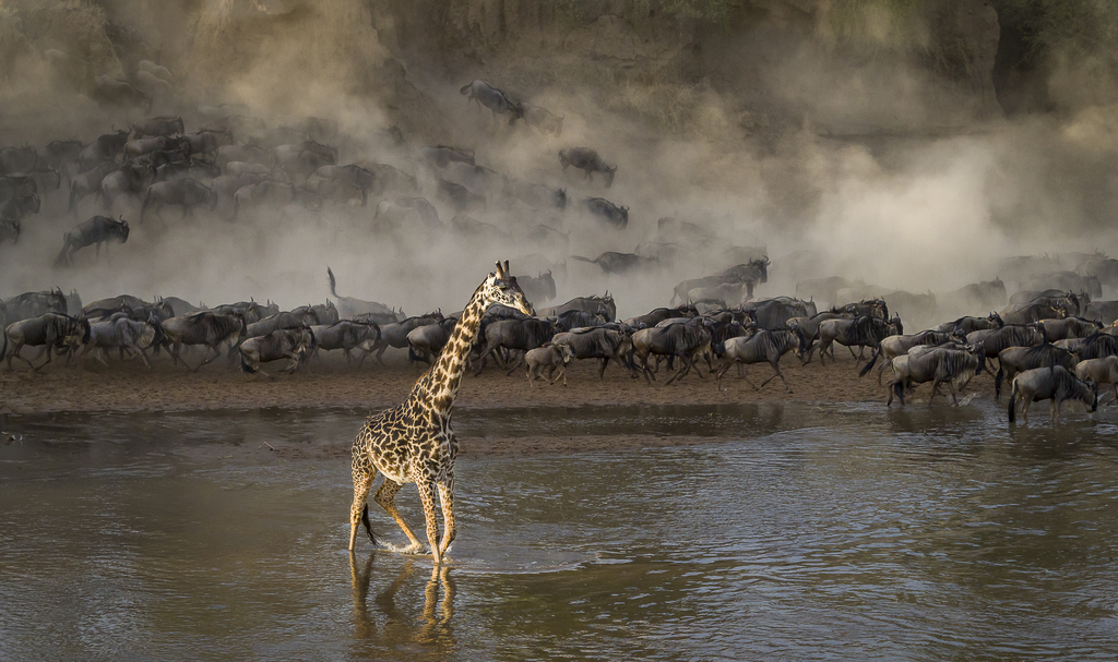 CROSSING WITH THE SAVANNA QUEEN