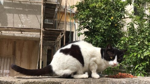 A street cat in central Israel