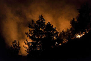 Forest fires in Cyprus, summer 2021