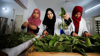 alestinian women collect tree leaves in Gaza