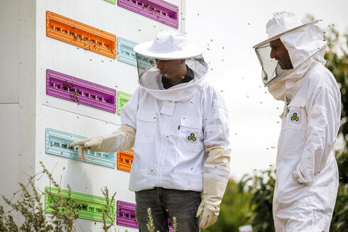 CEO Saar Safra and Hallel Schreier, head of research, stand next to a robotic beehive developed by the Israeli startup company Beewise in Beit Haemek,