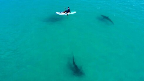 A researcher in a kayak studies sharks in the shallow waters near Hadera, Israel