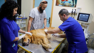 Palestinian veterinarian Ahmad Amad conducts an ultrasound on a dog at Royal Care Vet Clinic