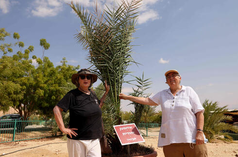 """Israeli scientists Sarah Sallon (L) and Elaine Solowey stand next to """"Judith"""", a female palm tree germinated from 2,000 year-old seeds discovered in the Judean desert, prior to transplanting it into the Negev desert soil, in Kibbutz Ketura in southern Israel"""