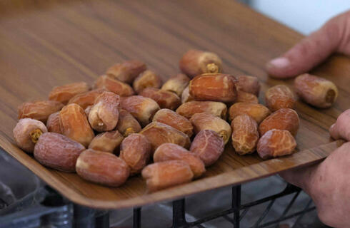 Dates harvested from 'Hannah', the first female date palm germinated from 2,000-year-old seeds discovered in the Judean desert