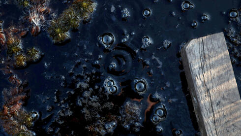 Methane bubbles are seen in an area of marshland at a research post at Stordalen Mire near Abisko, Sweden