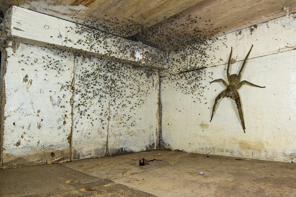 The spider room